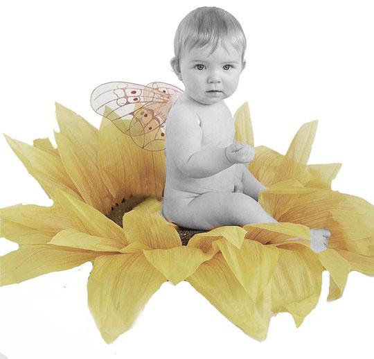 Schmetterling auf einer Sonnenblume