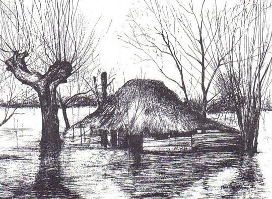 Mira Janjić, poplave u Posavini