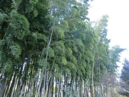 住宅地の近くなのに竹林も