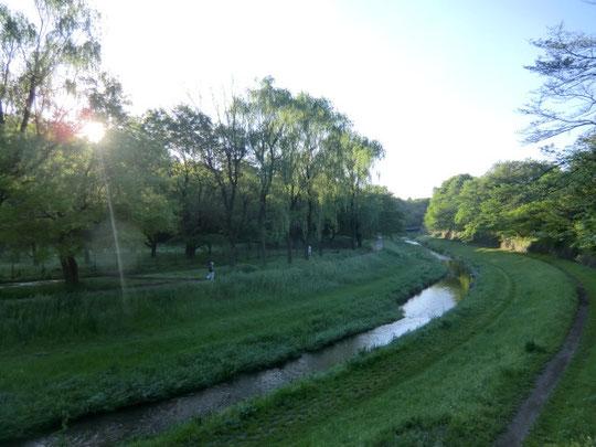 ネコちゃんにさよならをして野川を渡る橋の上から。今日はランニングも気持ちよさそう
