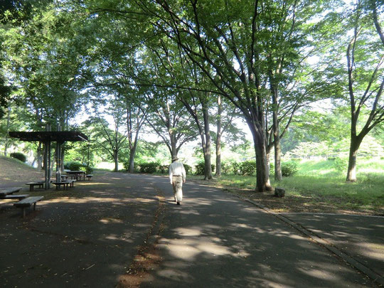 6月2日(2014) 木漏れ日の散歩道:武蔵野公園(野川遊歩道の近く)