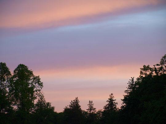 5月8日(2020) 朝焼けの空Ⅱ:こちらは野川公園で見た朝焼けです。公園の地表にもやがかかっている日は、大気中にも水蒸気が多く太陽光線が乱反射するようです。早朝散歩にて