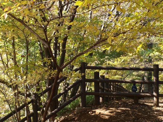 ●ラリーポイントB「平櫛田中彫刻美術館」の近く、玉川上水緑道の小川水衛所跡付近です。