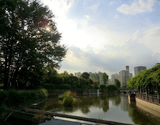 9月12日(2012) フジの回廊と武蔵池、西国分寺駅前のビルが見える場所(武蔵国分寺公園)