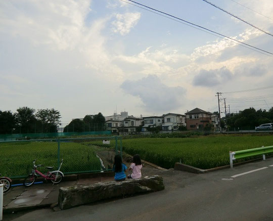 ●都会の中の田園風景