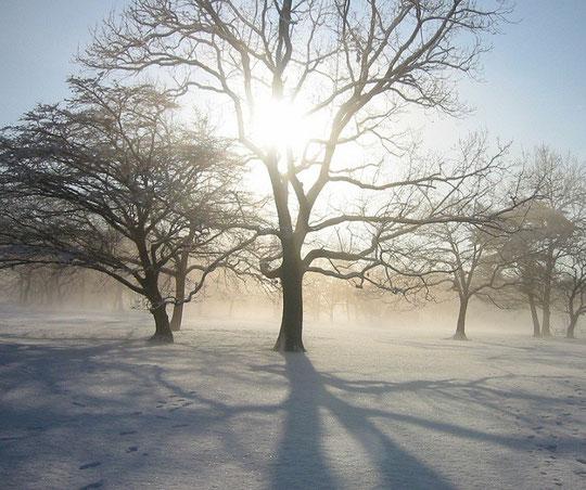 ●雪の降った朝(野川公園)