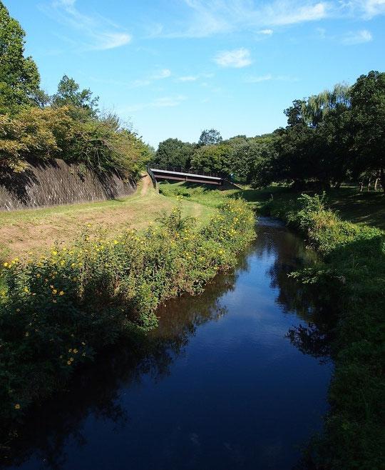 9月22日(2014) 秋空の野川:樫(かし)橋から櫟(くぬぎ)橋を眺める