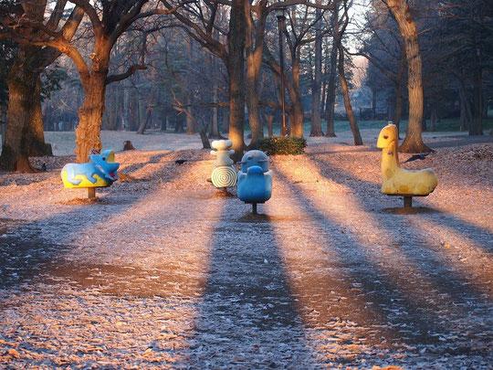 1月14日(2016) 朝の公園:日が昇るころ野川公園で