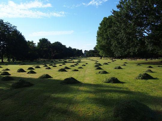 9月21日(2014) 刈り取られた芝生:野川公園の大芝生広場にて