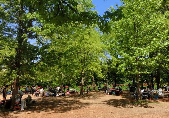 ●武蔵野公園のバーベキュー場。野川に面したとても気持ちの良い場所にあります。多磨霊園の北側を出て東八道路を超えると武蔵野公園です。