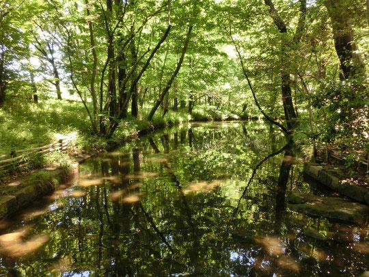 6月19日(2016) せせらぎの小路:神代植物公園のあじさい園近くにあるひっそりとした空間。背の高い木々に囲まれ、緑を映す小川が流れています