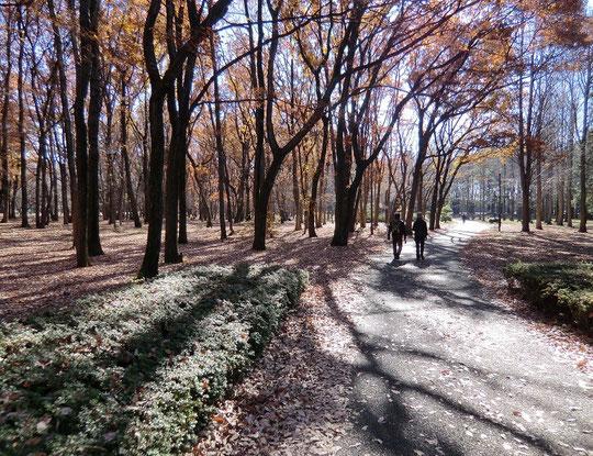 12月21日(2012) 散歩の風景Ⅱ(雑木林を歩く:野川公園)