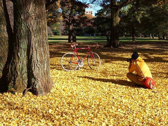 12月9日(2014) イチョウの絨毯で自転車を撮る人:12月2日、野川公園にて
