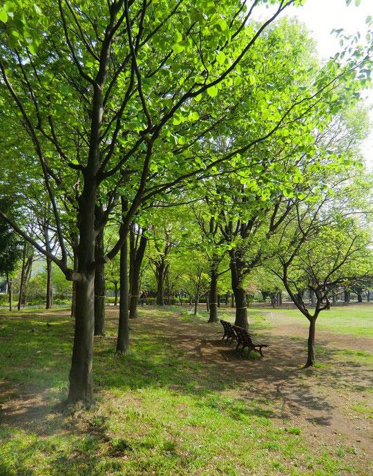 4月23日(2014) 木陰のベンチ:武蔵野中央公園(武蔵野市)