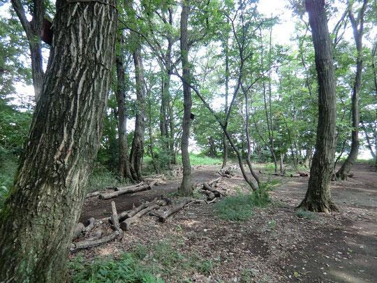 恋ヶ窪樹林の中の道