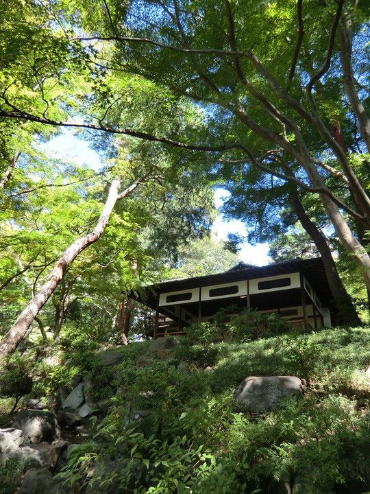 9月27日(2013) 紅葉亭(殿ヶ谷戸庭園:国分寺市)次郎弁天池から見上げる