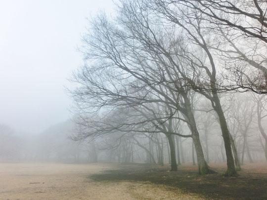 1月18日(2018) 霧の公園:久しぶりに雨が降った冬の日の翌朝、いつもの公園は深い霧につつまれて別世界のように見えました。野川公園の大芝生広場にて