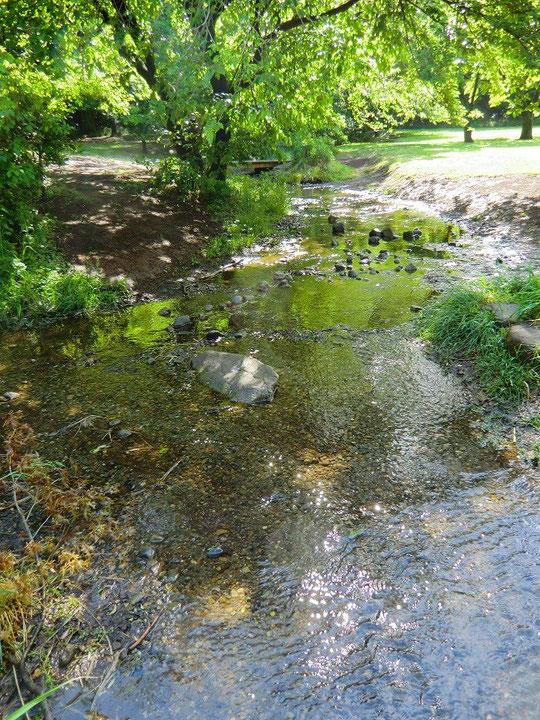 5月15日(2013) 湧水の流れ:野川公園の湧き水広場