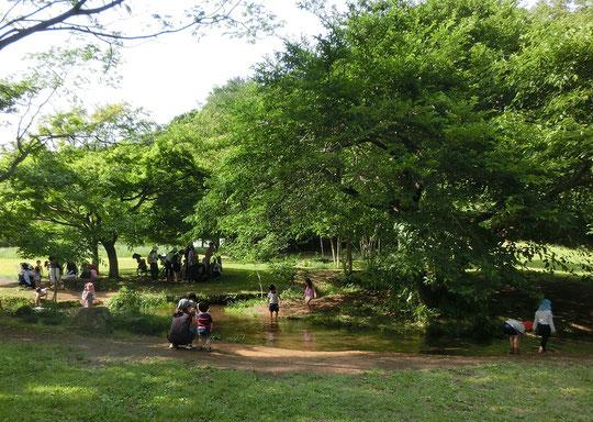 5月15日(2018) 水辺で遊ぶこどもたち:初夏を思わせるお天気の中、湧き水が流れる場所は、こどもたちの大好きな遊び場です。都立野川公園・湧き水広場にて