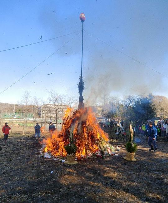 1月11日(2014) どんど焼き:正月の松飾などを積み上げ、書初めと一緒にだるまを燃やす厄除けの行事。竹が焼けはじける音が、どん!どん!と晴れ渡った冬空にこだましていました(調布市:佐須町)
