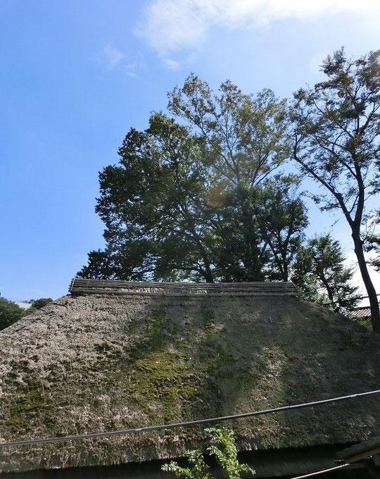 9月30日(2013) わらぶき屋根と秋の空:水車経営農家(三鷹市大沢)