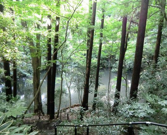 ●坂を下った場所に沼のような池がある(9月に撮影)