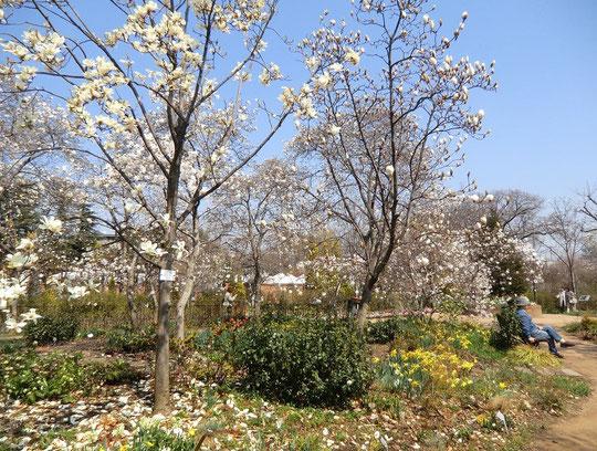 ●園内は春爛漫、ベンチでくつろぐ人も気持ちよさそうです