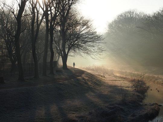2月15日(2015) 朝もやの野川遊歩道:2月13日にくぬぎ橋の上から