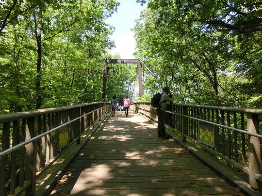 5月5日(2017)きすげ橋:多磨霊園から浅間山(せんげんやま)に渡る橋。浅間山は、武蔵野の台地が古多摩川によって削られて残った奇跡の山。貴重な自然景観が保護された都立公園となっています