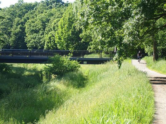 5月20日(2016) 緑濃い野川遊歩道:5月18日、みずき橋の近くで