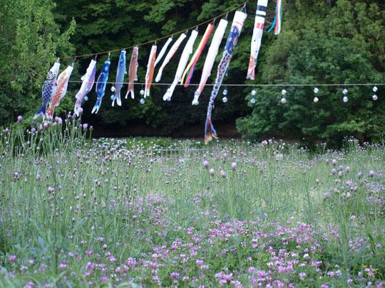 6月4日(2014) ケヤキの大木と少年キャンプ場(野川公園)