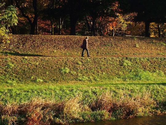 12月5日(2014) 朝日を浴びて歩く人:11月27日、野川遊歩道にて