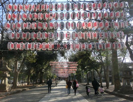 2月6日(2018)提灯の並ぶ道:府中市の大國魂神社参道にて。節分会で飾られた提灯が大鳥居から参道の奥の拝殿の方まで、ずっと続いていました。