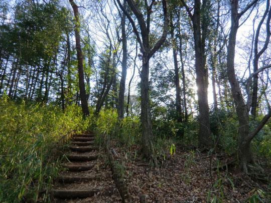 多磨霊園の26区から山登りをする