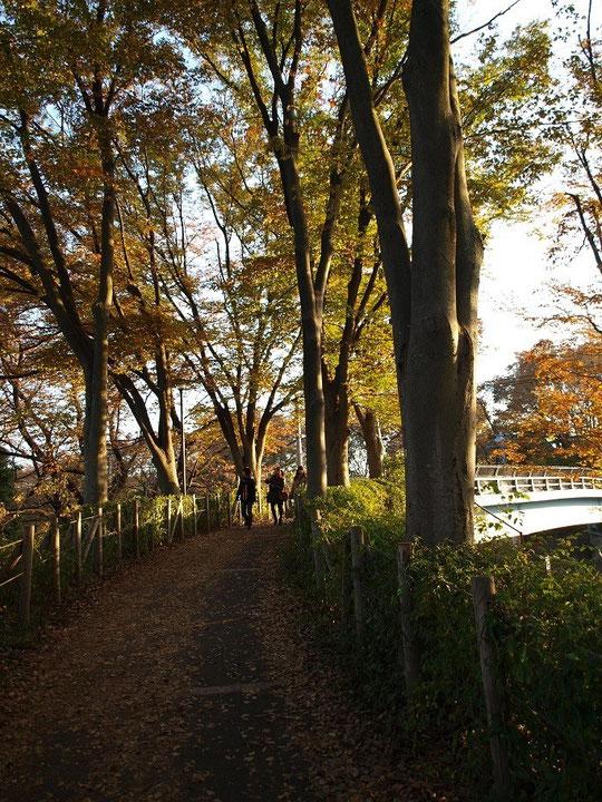 12月2日(2013) けやき橋(野川公園の東八道路にかかる橋)
