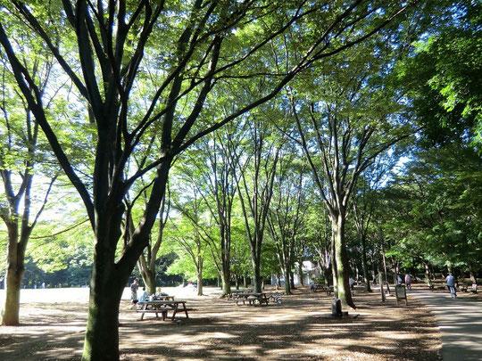 ●早朝の公園(神代植物公園・自由広場:調布市)