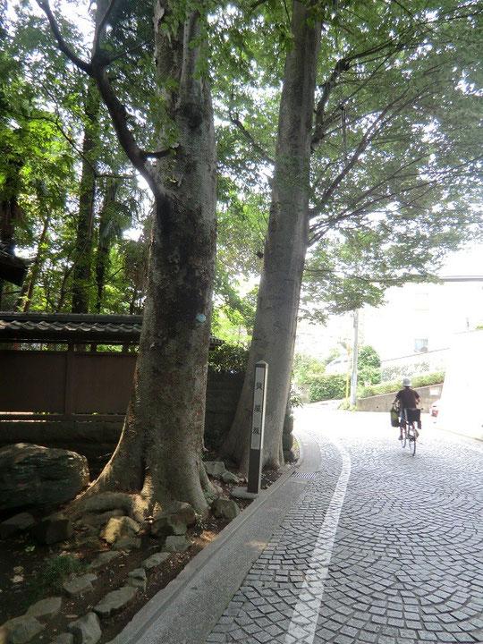 8月12日(2013) 質屋坂(小金井市):埼玉県志木から府中へ商人が往来した志木街道の旧道にある坂道。街道で最も険しい坂であったという。東側に幕末から明治の初期ごろ質屋があったのでこの名で呼ばれた