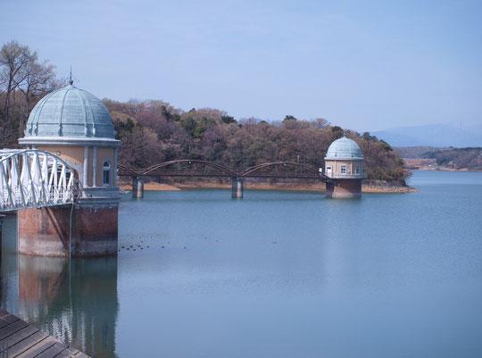 4月17日(2014) 菜の花とコサギ:野川にたたずむコサギと川辺の菜の花。この写真は三鷹市在住の武田さんからご投稿いただいたものです
