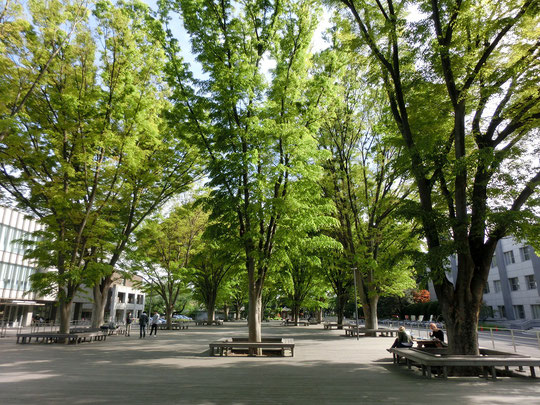 4月27日(2017) 新緑の学園:東京学芸大学(小金井市)構内にて。武蔵野の原風景を感じる緑ゆたかな大学。素晴らしい景観のけやき並木や地域に開かれた素敵なパン屋さんもあります