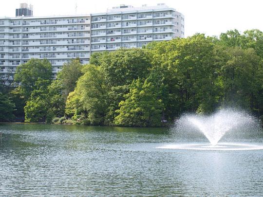 5月9日(2016) 公園と集合住宅:5月7日、井の頭池の橋の上から