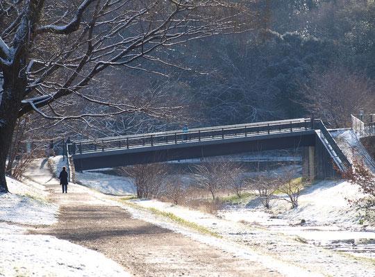 2月10日(2019) 雪化粧の遊歩道:雪が降った日の翌朝、野川遊歩道もうっすらと雪化粧です。そんな寒い朝にもかかわらず、いつも通りに散歩やランニングをする人も(野川公園のくぬぎ橋の近くで)。