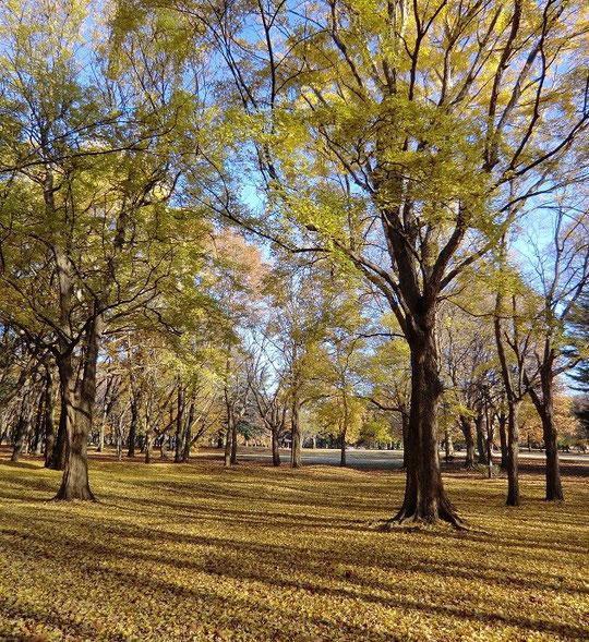 12月5日(2012) 落ち葉と雑木林(野川公園)