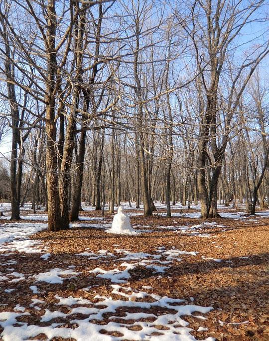 2月24日(2014) 残雪の雑木林(野川公園で2月21日に撮影)
