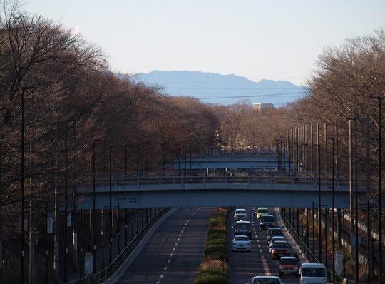 2月1日(2020)遠い山並み:東八道路(富士見大橋の近く)の国分寺崖線の上からの眺めです。小金井方向にのびる道の遥か先には秩父山系の山並みが見えました。右手の延長には武甲山、左手の延長には雲取山があると思われます。武蔵野が原野であったころの眺めを少しイメージ出来た気がします。