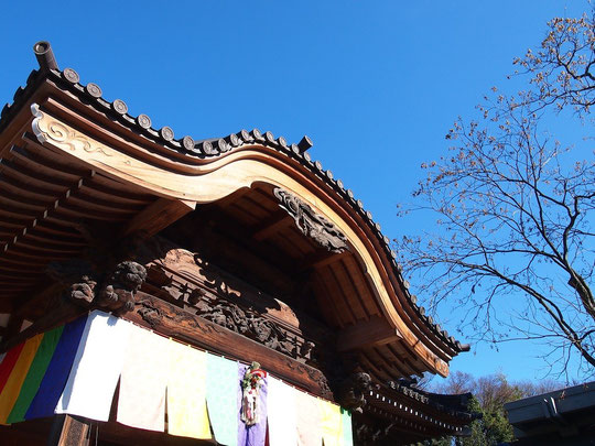 ●お正月飾りをした深大寺本堂とムクロジの木(調布市)