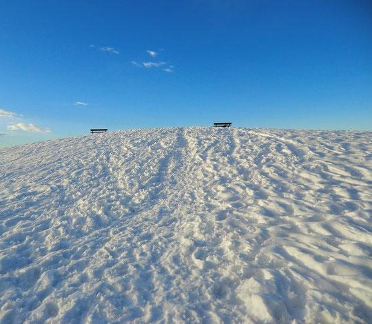 2月16日(2014) 雪の展望の丘:武蔵野の森公園