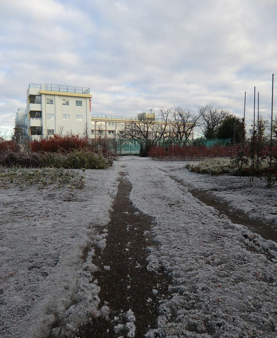 12月28日(2013) 凍てつく道と学校:三鷹市内