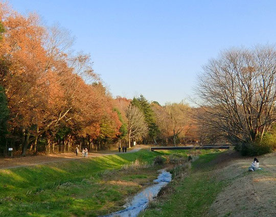 12月5日(2013)晩秋の野川:二枚橋の近くで