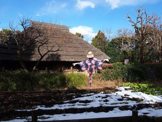 2月9日(2015) 残雪と案山子(かかし):案山子の後ろに見えるのが、小平開拓当初(江戸時代初期)の農民住居を復元した建物。2月6日、小平ふるさと村にて