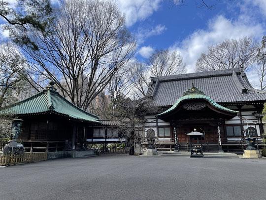 2月20日(2015) ドングリを食べるアオバト:神代植物公園にて(武田さんのご投稿写真)
